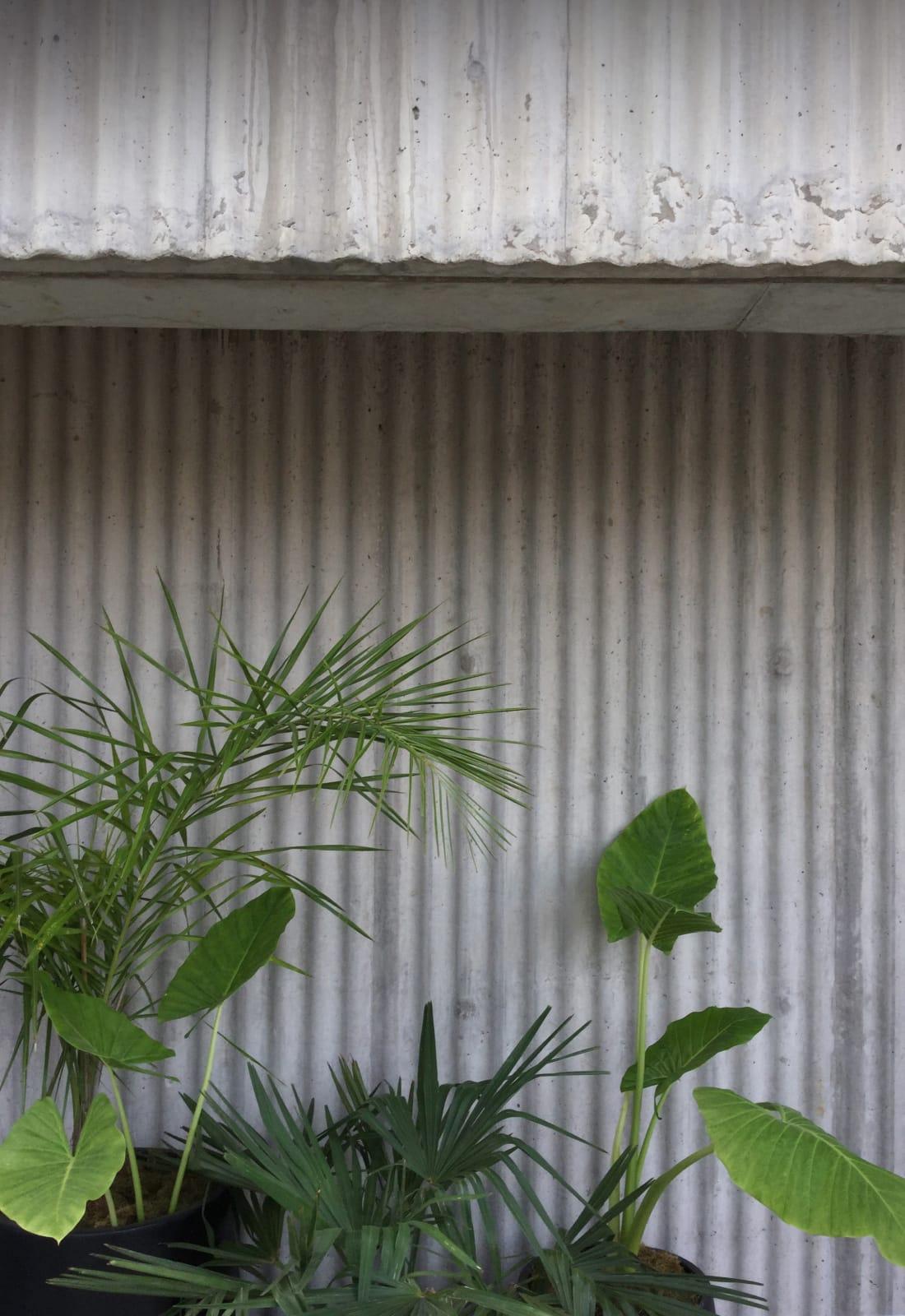 La propuesta paisajística superpone texturas y tonalidades de verde a las paredes del edificio.